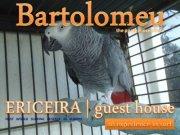 bartolomeu-usf-ericeira-serrapress